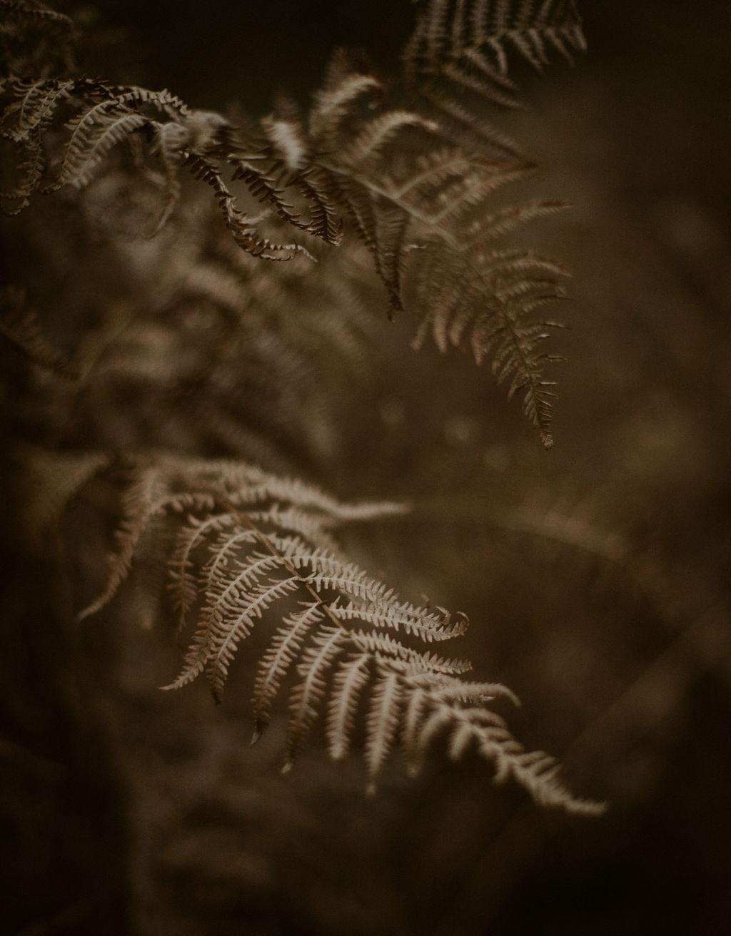 Fern by Ceranna Photography
